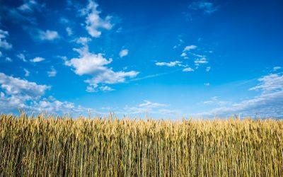 Agricultura Inteligente por Pablo Ogallar