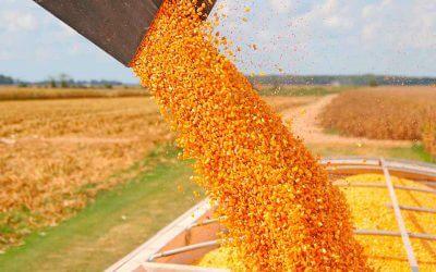 7 razones para considerar más maíz en la planificación de esta campaña